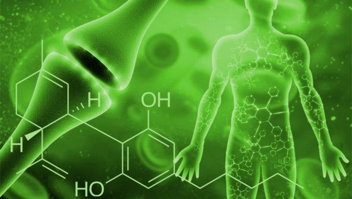 Mi az endokannabinoid rendszer?